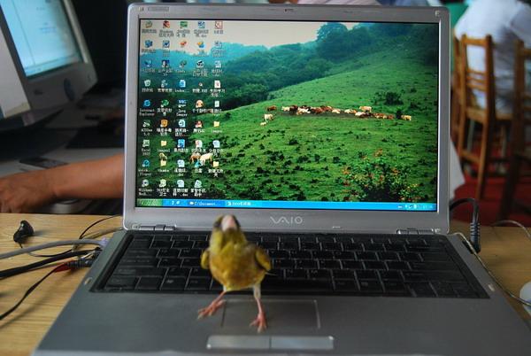 翠鸟站在我的笔记本电脑上
